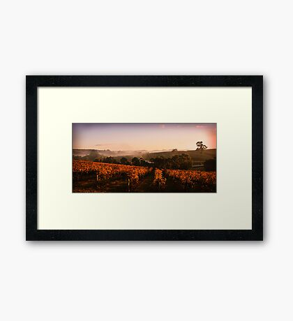 Misty Vineyard, Nr Gumeracha, Adelaide Hills, SA Framed Print