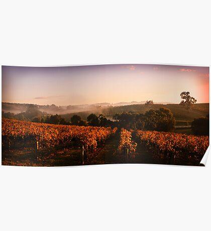 Misty Vineyard, Nr Gumeracha, Adelaide Hills, SA Poster