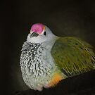 Rose-crowned Fruit Dove  (Ptilinopus regina),  by Magee