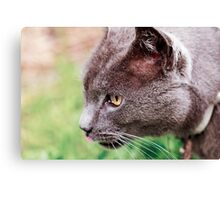 Licking His Lips Canvas Print