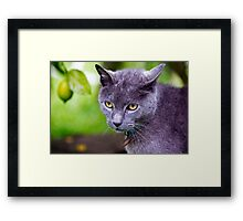 Under the Lemon Tree Framed Print