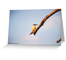 """Dinnertime at Kingfisher's"", Lambden Reserve,Serpentine Greeting Card"