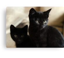 Beautiful Black Kittens Canvas Print