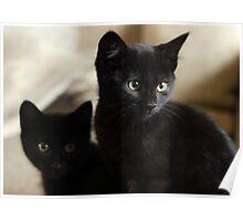 Beautiful Black Kittens Poster