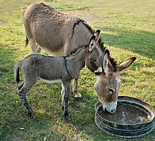 Mother Donkey and her Baby by Bonnie T.  Barry