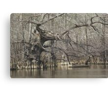Wicked Cypress Canvas Print
