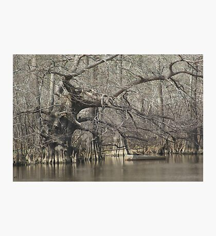 Wicked Cypress Photographic Print