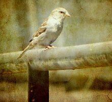 A feathered friend © by Dawn M. Becker