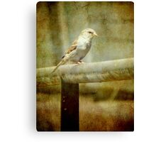 A feathered friend © Canvas Print