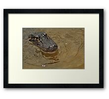 Young Alligator, As Is Framed Print