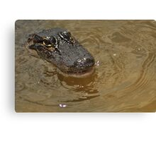 Young Alligator, As Is Canvas Print