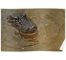 Young Alligator, As Is Poster