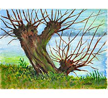 2 WILLOW TREES Photographic Print