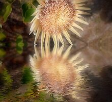 King Protea Reflection by Elaine Teague