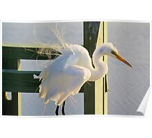 Shake your Tail Feathers Poster