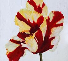 Scarlet and Cream Tulip by Susan Duffey