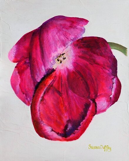 Pink Parrot Tulip by Susan Duffey