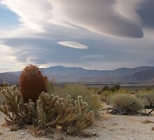 Cactus and Clouds, Owens Valley, California by David Galson