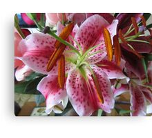 Multi-colored Lilly close-up with pollen  Canvas Print