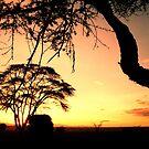 Alba sulla savana by Foto Kem