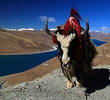 Yamdrok Tso Lake and a Yak by Mark Bolton