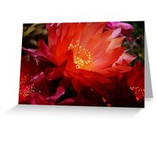 Orange & Red Echinopsis Greeting Card