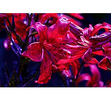 Psycho Lilies Photographic Print
