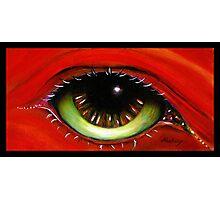 Red Eye   Photographic Print