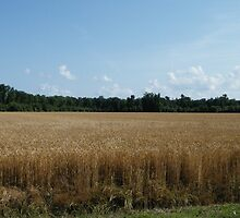 Wheat Field by WeeZie