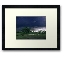 Cows on a pasture. Framed Print