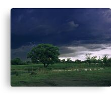 Cows on a pasture. Canvas Print