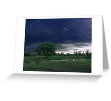 Cows on a pasture. Greeting Card