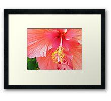 Super Macro Hibiscus Framed Print