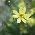 Yellow flower in English garden. by SunshineSong