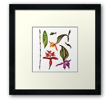 Orchids and Ink (Flowers)  Framed Print