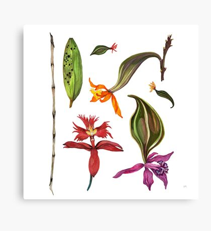 Orchids and Ink (Flowers)  Canvas Print