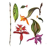 Orchids and Ink (Flowers)  Photographic Print