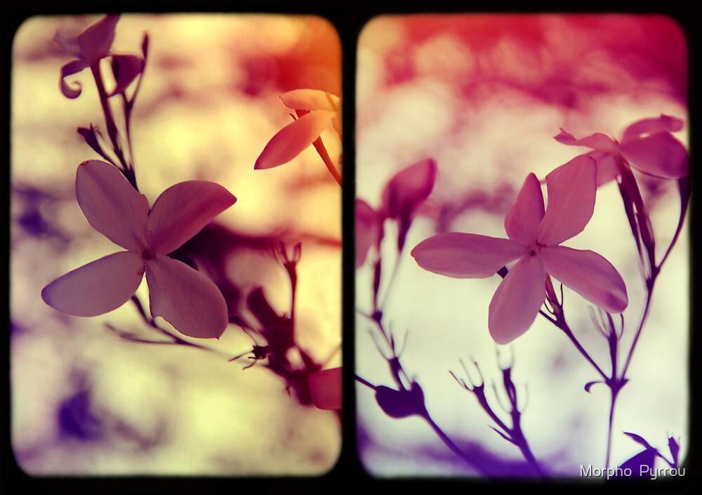 blossoms of heaven by Morpho  Pyrrou