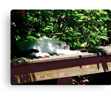 Cliffords Afternoon Siesta  Canvas Print