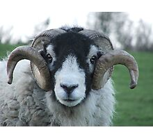 Swaledale Tup Photographic Print