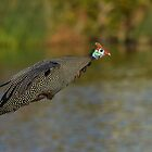 Fowl Flight by Macky