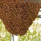 Honey bee nest by thermosoflask