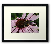 Bee and My Shadow................ Framed Print
