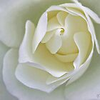 White Flower 2 by Peter Stratton