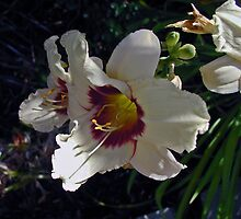 White Day Lillies by Sherry Cummings