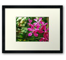 Orchid Collection - 21 Framed Print