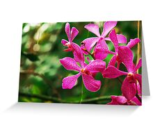 Orchid Collection - 21 Greeting Card
