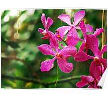 Orchid Collection - 21 Poster
