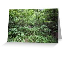 IN THE WOODS SOME WHERE! Greeting Card