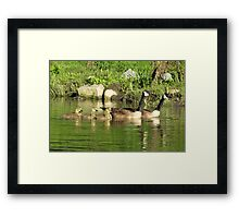 Family swim: Canada geese Framed Print